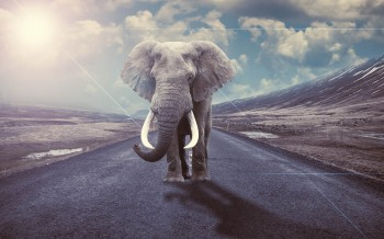 Un éléphant - Photo Manipulation avec Photoshop