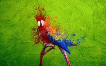 Visuel d'un perroquet en couleur avec Photoshop
