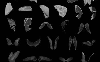 Brushes ailes d'oiseaux et de papillons