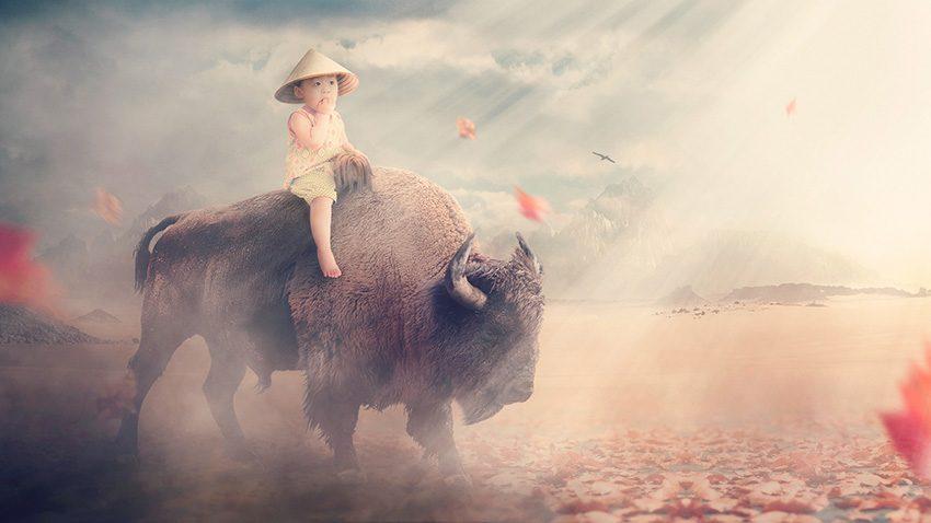 rendu final tuto bison
